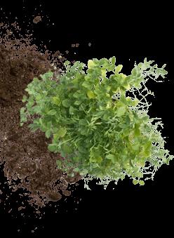 left-plant