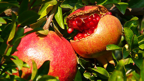 15_Pomegranate-polyphenols